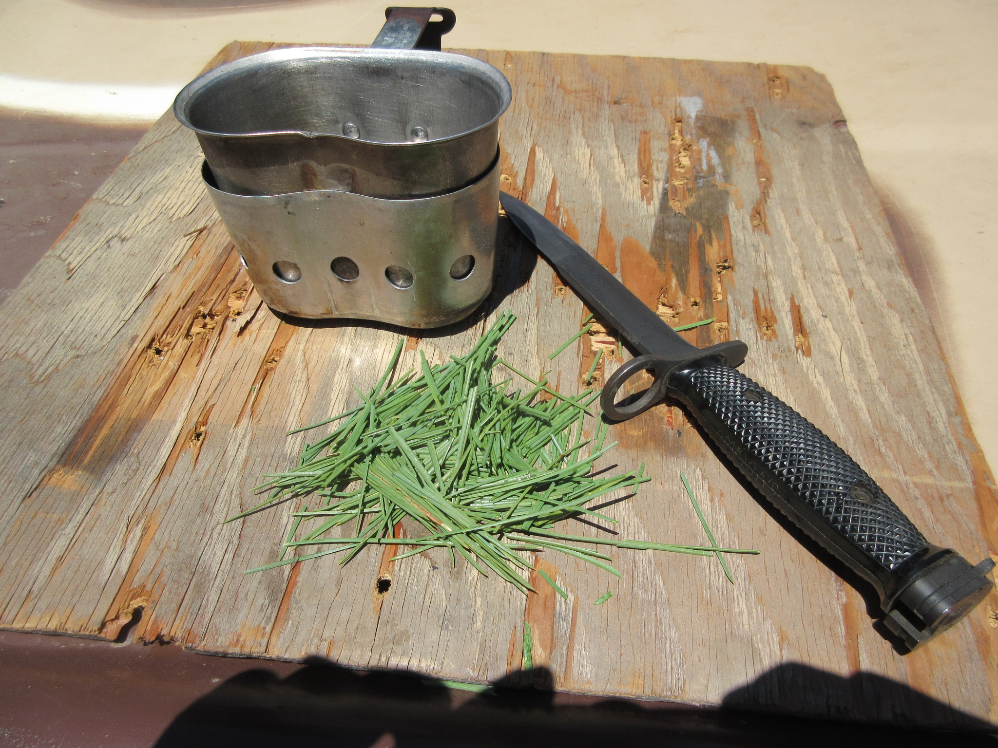 Preparing Pine Needle Tea